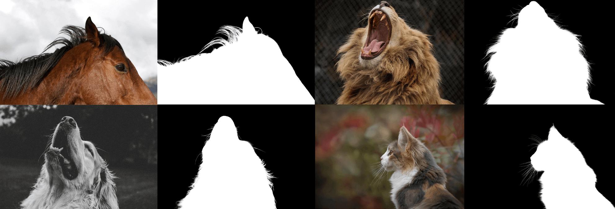 神奇的 Animal Matting 算法,毛发抠图不是事。